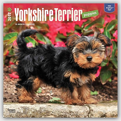 Yorkshire Terrier Puppies - 2017 Calendar 12 x 12in