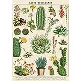 Cavallini Decorative Wrap Poster, Cacti & Succulents, 20 x 28 inch Italian Archival Paper (WRAP/SUC)