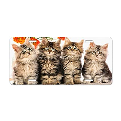 Maine Coon Cat License Plate Front License Sign Car Tag Decorative Metal Plate