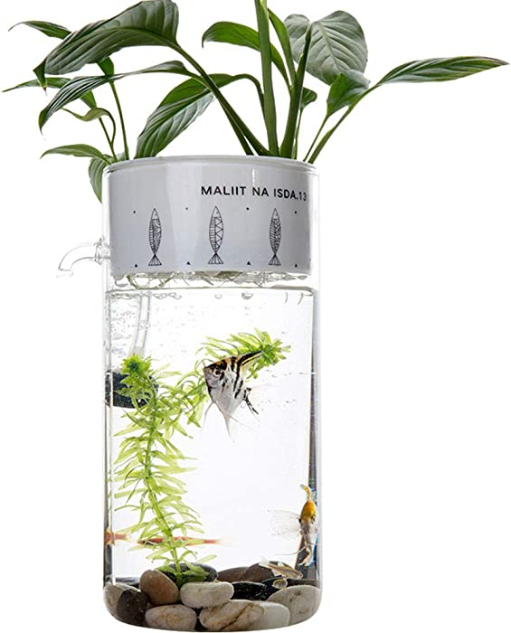 Top 4 Aquariums For The Office