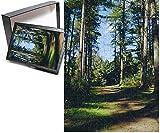 Photo Jigsaw Puzzle of Woodland walk, Sherwood Forest, Edwinstowe, Nottinghamshire, England