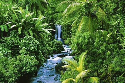 (Studio B Laminated Rain Forest Poster)