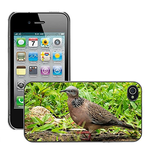 Bild Hart Handy Schwarz Schutz Case Cover Schale Etui // M00134225 Dove Vogel Close // Apple iPhone 4 4S 4G