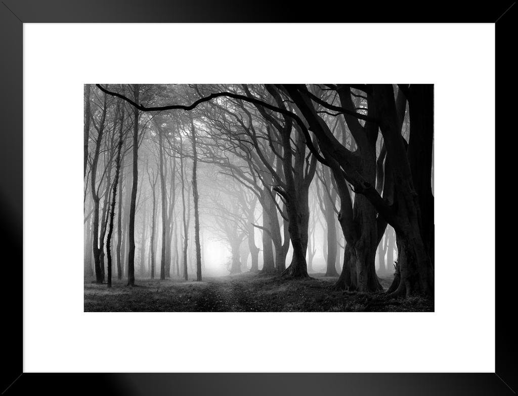 Poster foundry fog in a beech tree grove black and white photo art print matted framed wall art 26x20 inch