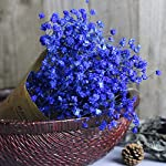 Quaanti-Babys-Breath-Artificial-Flowers-Gypsophila-Natural-Dried-Flower-Sky-StarReal-Touch-Flowers-for-Wedding-Party-Home-Garden-Decoration-Blue-B