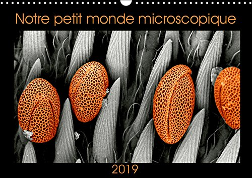 Download Notre petit monde microscopique 2019: Notre petit monde dans un microscope electronique a balayage (Calvendo Science) (French Edition) ebook