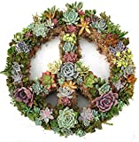 "18"" Peace Sign Living Wreath Sphagnum Moss Form Complete"