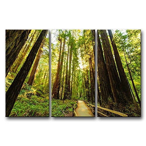 Canvas Print Wall Art Painting For Home Decor,Fenced Road Through The Redwood Trees Sunrise Grass 3 Pieces Panel Paintings Modern Giclee Stretched And Framed Artwork Oil The Picture For Living Room Decoration,Landscape Pictures Photo Prints On Canvas