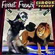 2012 Ferret Frenzy Wall calendar