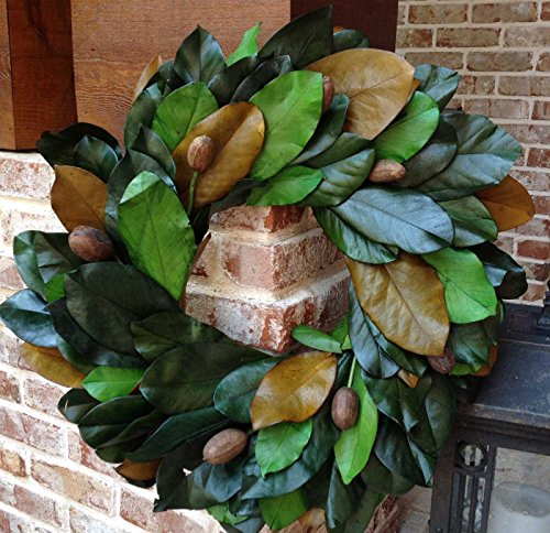Flora Decor Preserved Magnolia Wreath with Pods - 24