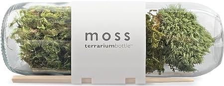 Moss Terrarium Bottle Amazon Co Uk Kitchen Home