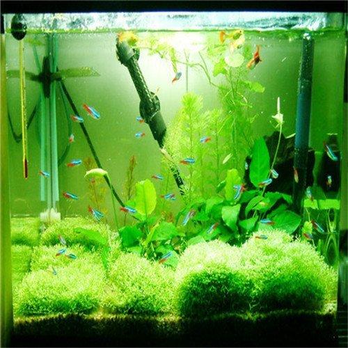 Brend Fly Garden Plant 500pcs / bag Crown grass water aquatic plant seeds, family easy plant seeds, aquarium grass seeds