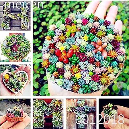 100Pcs Mixed Lithops Seeds Living Stones Succulent Plant Bonsai Garden Decor NEW