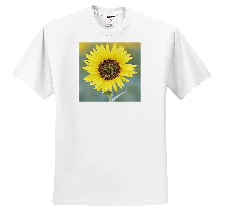 ts/_314618 Close-up of Sunflower USA 3dRose Danita Delimont Napa Valley California - Adult T-Shirt XL Sunflower