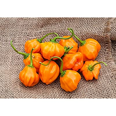 Aji Dulce Orange Heirloom Pepper Premium Seed Packet + More : Garden & Outdoor