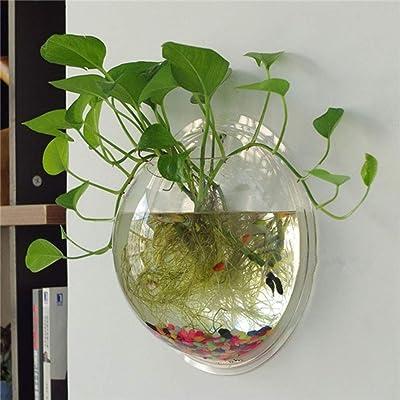 Demarkt Clear Wall Plant Hanging Vase Garden Transparent Plant Pots Bowl Fish Tank Aquarium: Garden & Outdoor