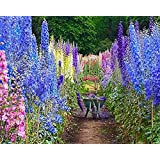 Larkspur - Wild Delphinium Mixed Colors - 4' Tall and Used Widely by Floral Designers