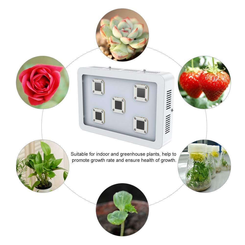 1200W//1500W//1800W Lampe Horticole Floraison Croissance LED COB Spectre Complet Eclairage Semis Serre pour Plantes Germination Floraison 1200W