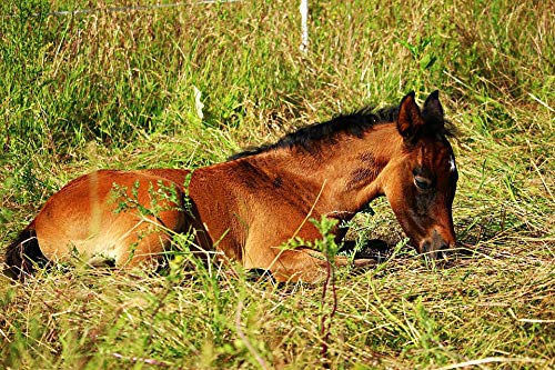 - Framed Art for Your Wall Horse Thoroughbred Arabian Brown Mold Grass Foal Vivid Imagery 10 x 13 Frame