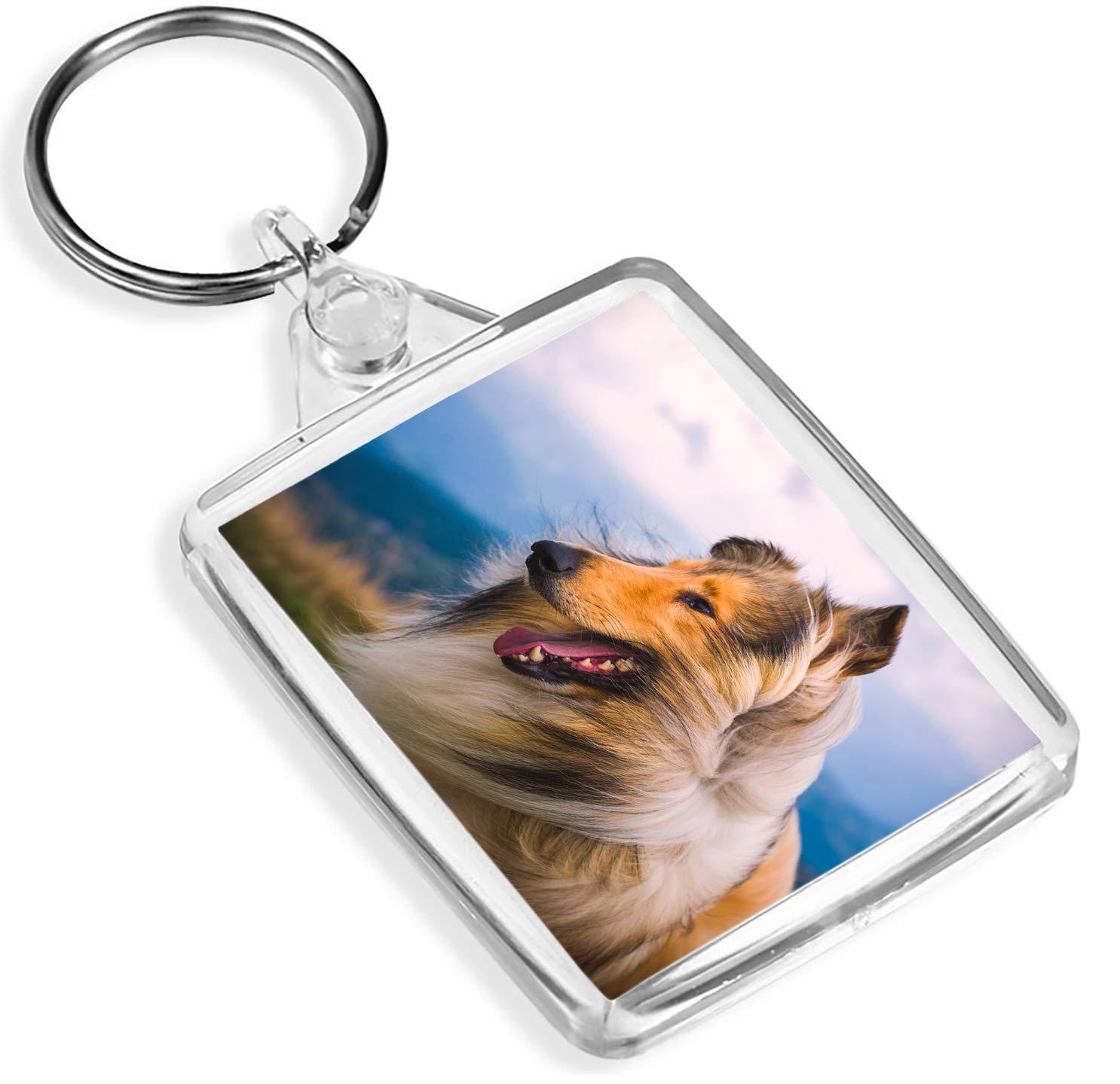 Beautiful Rough Collie Keyring IP02 Sheep Dog Puppy Cool Farm Gift #8615