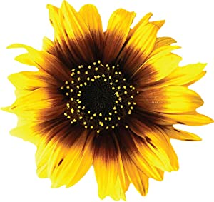 StikArt Removable Sunflower Decals Printed on Waterproof Canvas (13 Flowers)