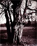 img - for Eug ne Atget's Trees: Newly Discovered Photographs from the Biblioth que Nationale de France book / textbook / text book