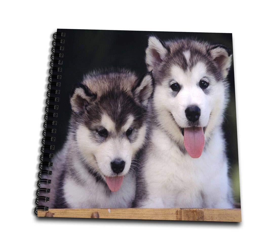 3dRosa DB 55166 _ 1 2 Alaskan Malamute Puppies-Drawing Buch, 8 von 20,3 cm B00BA32B44    | Zu einem niedrigeren Preis
