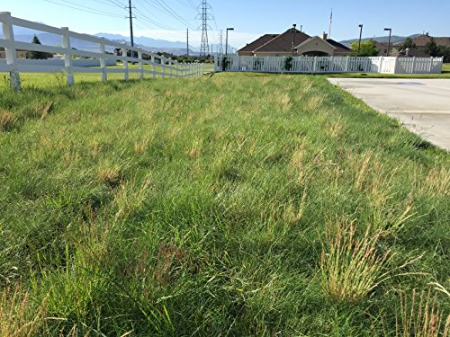 Low Maintenance Grass Seed Blend (500 sq. ft.)