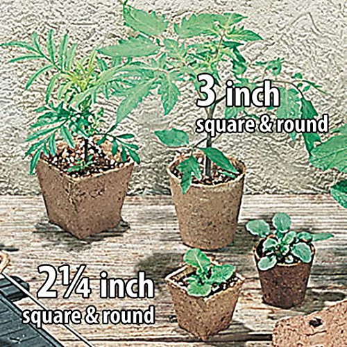 Park Seed 3 inch Square Jiffy Pots Pack of 100