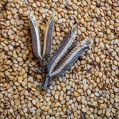 Burpee Common Sesame Seeds 500 seeds