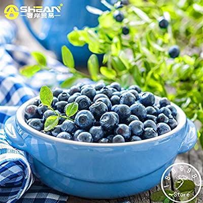 Purple Blueberry Seed Windowsill Roof Fruit Seed Potted Bonsai Tree Plant Vaccinium Seed a Pack 200 Pcs/bag, #2ALREI : Everything Else