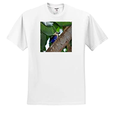 Birds 3dRose Dreamscapes by Leslie Adult T-Shirt XL ts/_314227 Blue Bellied Roller Bird