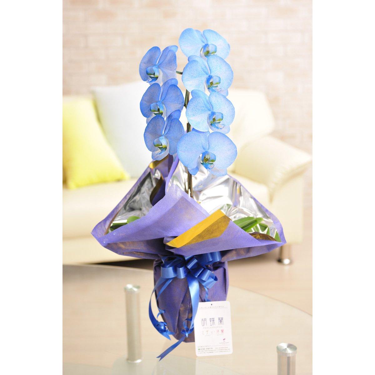 花とギフトのセット 選べる花色のカラー胡蝶蘭 彩 - irodori - 1本立 青(寒色系)とカタログギフト(ミストラル/マロウ) B07DLSBMVZ 青 青