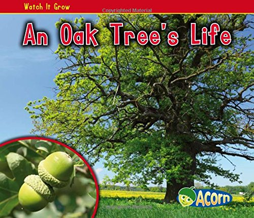 An Oak Tree's Life (Watch It Grow)