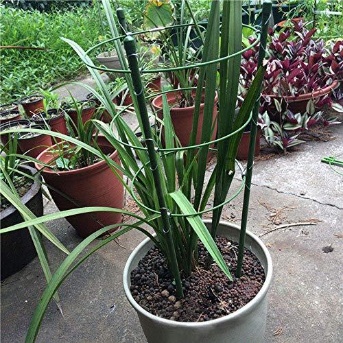 ASLEAK - Anillo de Soporte para Plantas de jardín, tamaño Grande ...