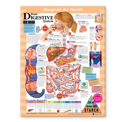 Your Digestive System Blueprint Chart (Blueprint for Health) Anatomical Chart Co U.S. 1587797399 ANF: Health and Wellbeing Anatomy Children' s Books Embryology MEDICAL MEDICAL / Embryology MEDICAL / Family & General Practice MEDICAL / Pediatrics
