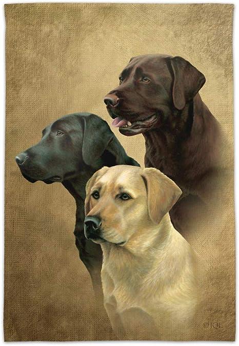 Labrador Retriever Trio Dogs Portrait Novelty 16oz Pint Drinking Glass Tempered