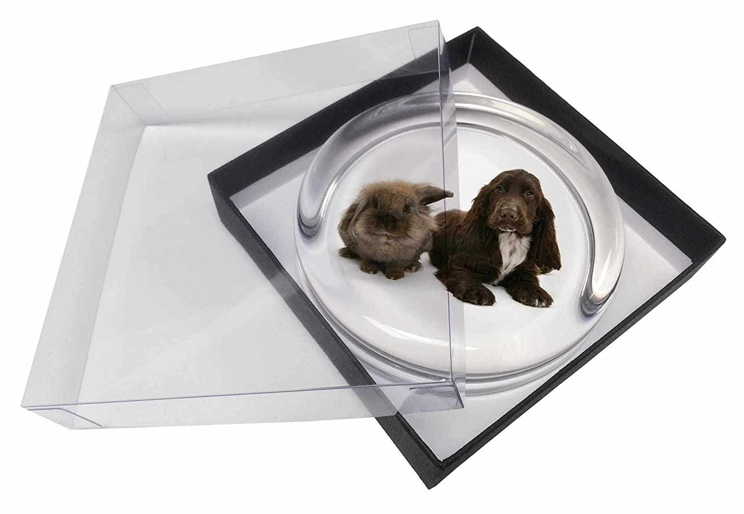 Paperweights AD-SC2PWCute Cocker Spaniel Dog and Rabbit Glass Paperweight in Gift Box Advanta