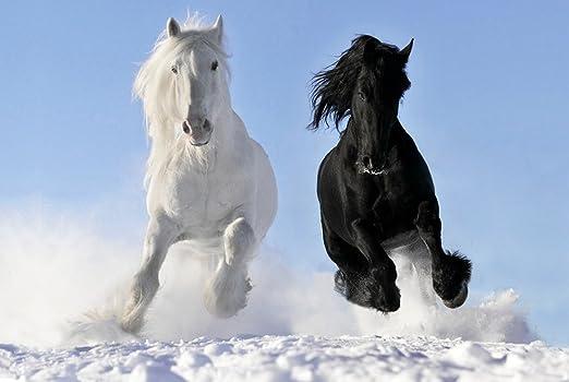 """Black and White Horses Mini Poster 13/""""x19/"""""""