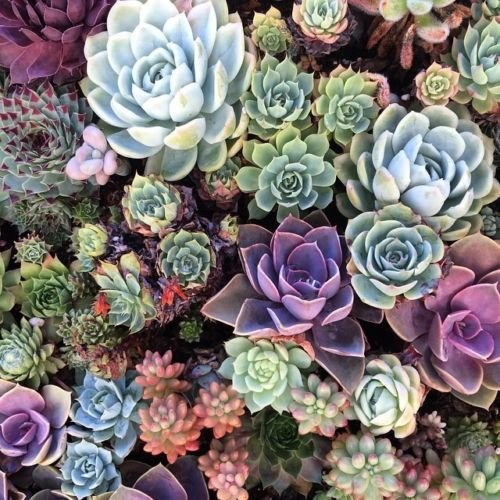 PRE-WIRED Assorted Succulent ROSETTES-DIY Craft Wedding Bridal Bouquet Wreaths