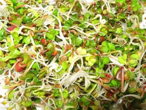 ORGANIC BIO Sprouting seeds - VITA MIX PLUS - 4 species Sprout 20 GRAMS /0.7 oz Vita Sprout