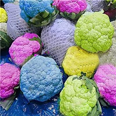 Organic Colorful Broccoli Seeds Cauliflower Seed Vegetable Plant Seeds Hybrid Seeds Heirloom Non-GMO for Home Garden : Garden & Outdoor