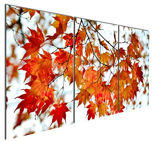 Maple Canvas - 7
