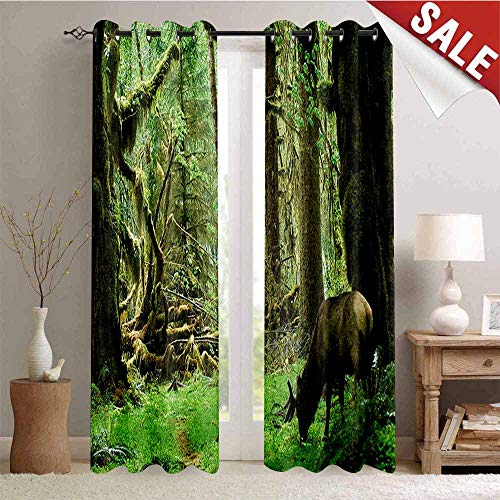 Flyerer Rainforest, Decorative Curtains for Living Room, Roosevelt Elk in Rainforest Wildlife National Park Washington Antlers Theme, Waterproof Window Curtain, W84 x L84 Inch Green Brown