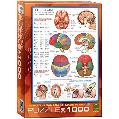EuroGraphics Human Body (The Brain) 1000 Piece Puzzle