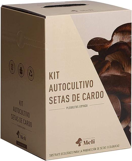 SETAS MELI   Kit Autocultivo Setas Ecologicas de Cardo   Para cultivar en casa   Crece en 10 dias   Kit perfecto para regalar   Hecho en España   Kit ECOLOGICO Y RECICLABLE: Amazon.es: Jardín