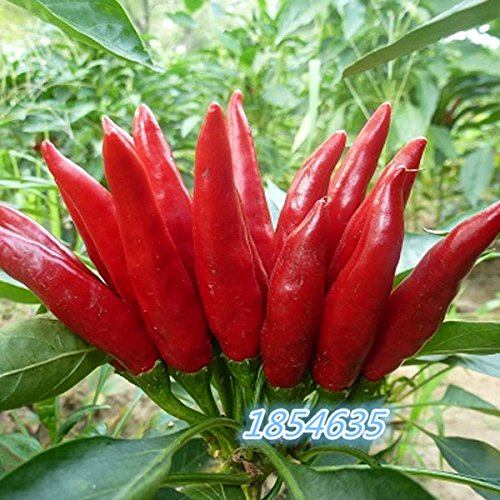 50pcs/pack red hot chili peppers,Pepper Seeds, Giant Sweet Pepper Seeds vegetables seed