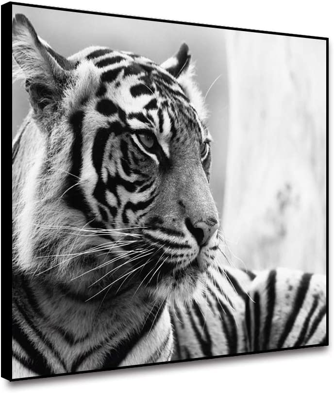 ARRMT Framed Canvas Wall Art Prints Animal Pictures The Bengal Tiger Grey Background for Nordic Modern Home Decoration Living Room Bedroom Kitchen Bathroom Office Wall Artwork Decor Poster 18x12inch