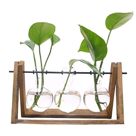 Amazon Com Plant Terrarium With Wooden Stand Glass Vase Holder For