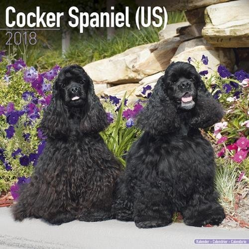 Cocker Spaniel (US) Calendar - Dog Breed Calendars - 2017 - 2018 wall Calendars - 16 Month by Avonside (Cocker Spaniel Calendar)